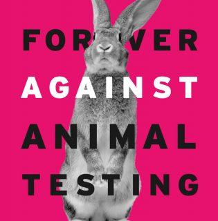 Több mint 3 millió aláírás a kozmetikai célú állatkísérletek betiltásáért (X)