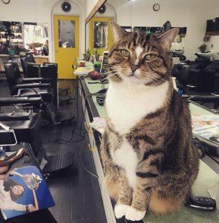 Macskájával lazítja le izguló vendégeit ez a fodrász