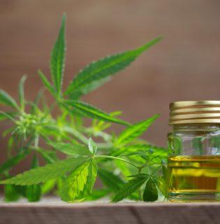 A cannabis tartalmú kozmetikumoknak áll a jövő