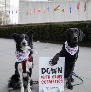 A The Body Shop és a Cruelty Free International több mint 8 millió petíció aláírást vitt az ENSZ elé (X)